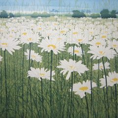 phil-greenwood-art-etching-daisies-daisy-white-yellow-fields
