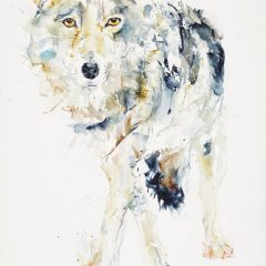 Raj-Rana-wolf-blue-Original-Art-Watercolour-paper