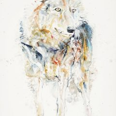 Raj-Rana-wolf-red-Original-Art-Watercolour-paper