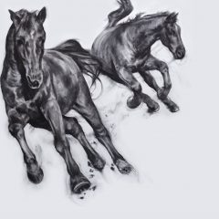 Figurative artist Patsy Mcarthur. Two monochrome charcoal drawn horse on paper galloping