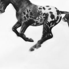 Figurative artist Patsy Mcarthur. Monochrome charcoal drawn horse on paper galloping