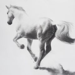 Figurative artist Patsy Mcarthur. Back of monochrome charcoal drawn horse on paper galloping