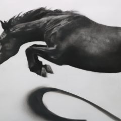 Figurative artist Patsy Mcarthur. Monochrome charcoal drawn horse on paper jumping through the air