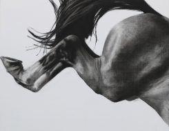 Figurative artist Patsy Mcarthur. Monochrome charcoal drawn horse on paper kicking its back legs