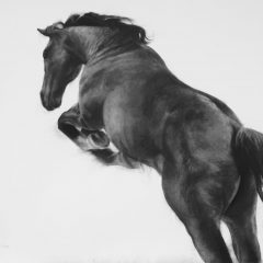 Figurative artist Patsy Mcarthur. Back of monochrome charcoal drawn horse on paper jumping up
